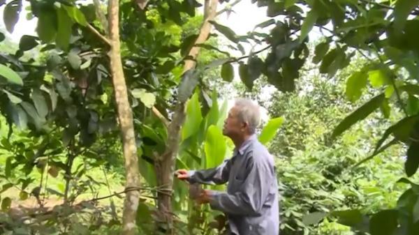 Ấn tượng mạnh mẽ từ cụ ông 73 tuổi người Cao Bằng làm kinh tế giỏi