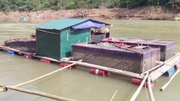 Nuôi cá lồng ở Bảo Lâm (Cao Bằng): Một nghề tiềm năng đầy hứa hẹn
