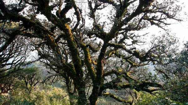 Lên Cao Bằng, lạc bước đến Phia Oắc, để nhớ một rừng rêu...