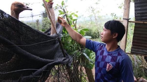 Đắk Lắk: Anh chàng 8X khởi nghiệp từ nuôi đà điểu