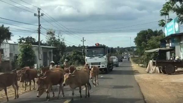 """Đắk Lắk: Có một con đường mang tên """"đường trâu bò"""""""