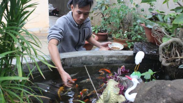 TP Buôn Ma Thuột: Nở rộ trào lưu  nuôi cá Koi Nhật Bản