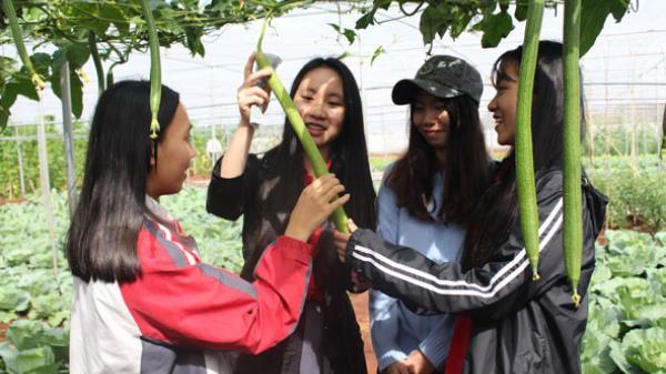 TP Buôn Ma Thuột: Mô hình rau sạch cho học sinh tham quan