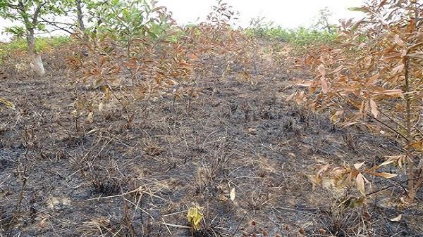 Krông Năng: Kiểm sát khám nghiệm hiện trường vụ cháy hơn 5.000 cây keo