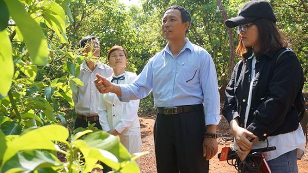 Đắk Lắk: Nông dân trồng bơ thời @