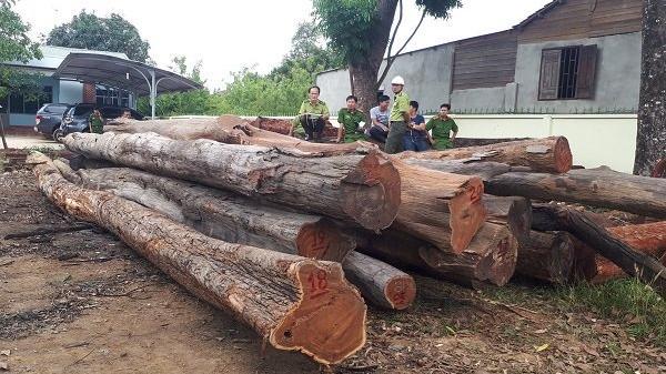 Vụ bắt gỗ lậu tại Đắk Lắk: Tiết lộ 'sốc' từ Cục Kiểm lâm