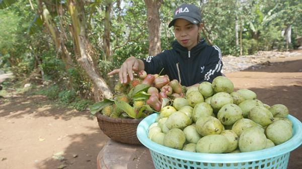 Mùa trái cây rừng lên ngôi ở Đắk Lắk