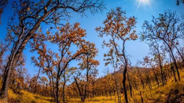Vườn Quốc gia Yok Đôn – thiên nhiên hoang sơ ở núi rừng Tây Nguyên