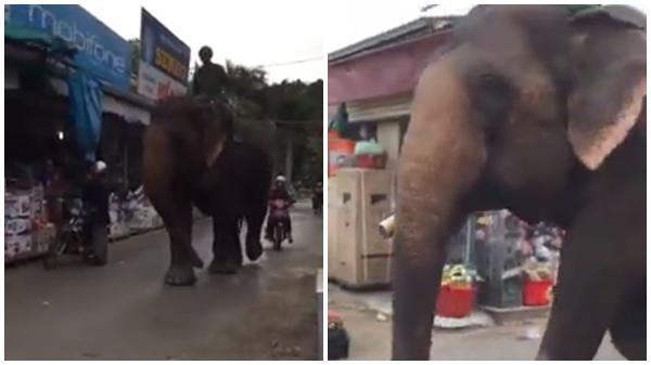 Người đàn ông cưỡi voi đi dạo giữa đường lớn