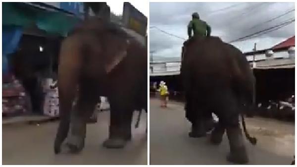 'Ở Đắk Lắk cưỡi voi đi học hả?' và đây là cách đáp trả khiến CĐM té ngửa của người con 'Bản Đôn'