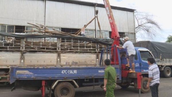 Bắt xe tải chở trên 11 mét khối gỗ lậu