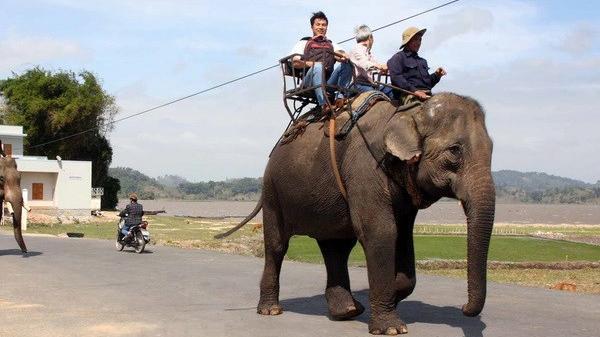 """Vườn Quốc gia Yok Đôn chuyển đổi loại hình du lịch """"cưỡi voi"""""""