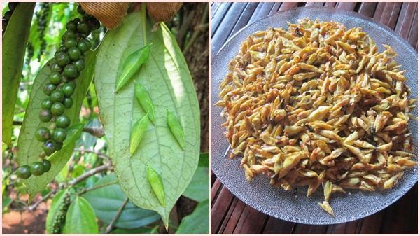 Đắk Lắk: Nhộng 'sâu muồng' món ăn đặc trưng của đồng bào Ê-Đê