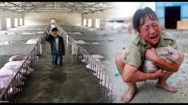 Đắk Lắk: Tiếng khóc nghẹn ngào của các tiểu thương trước giá lợn thấp đỉnh điểm mà vẫn ế
