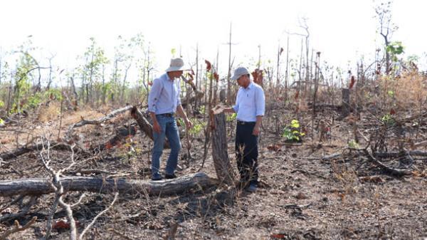 Đắk Lắk: Tiếng khóc của núi rừng trước tình trạng ph.á rừng, lấ.n chiế.m đất rừng dọc Quốc lộ 29