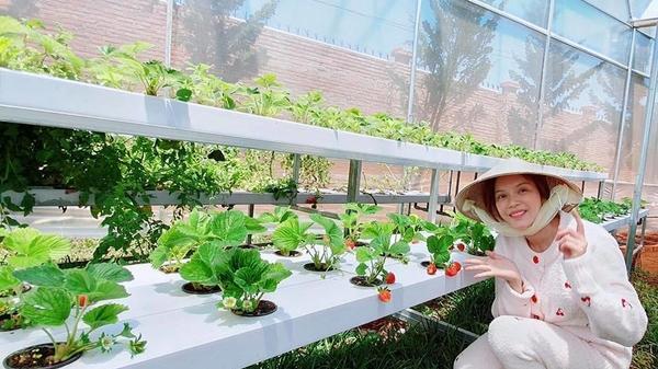 Ngoài nhà ở khắp nơi, Lý Nhã Kỳ lại khoe vườn dâu tự trồng ở Đà Lạt khiến fan ghen tị