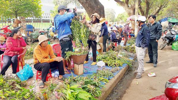 Đắk Lắk: Khi rừng không còn hoa lan