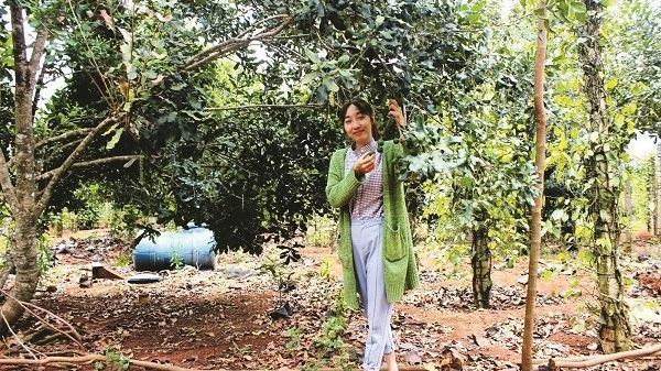 9X Đắk Lắk khởi nghiệp với cây mắc ca