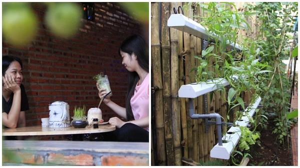 Đắk Lắk: Độc đáo quán cà phê rau sạch giữa thành phố Buôn Ma Thuột