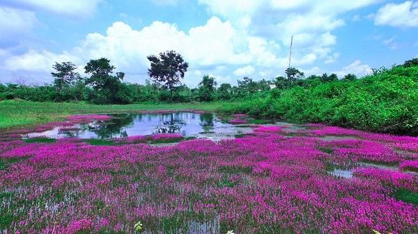 Hãy giữ vẻ đẹp cho cánh đồng hoa tím