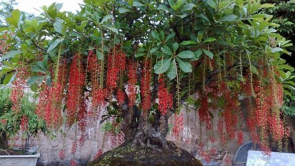 Trồng cây gì trước nhà để rước tài lộc cho năm mới?