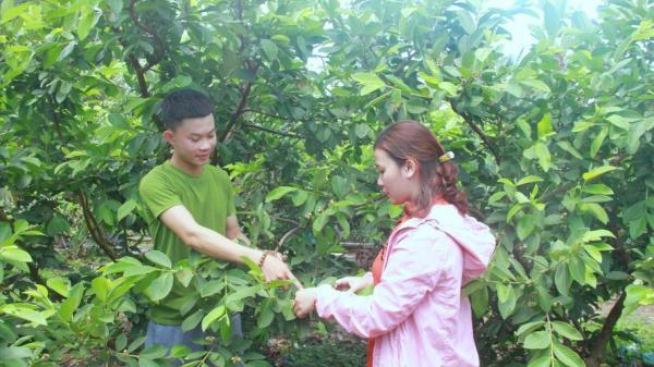 Chàng trai đưa miệt vườn lên cao nguyên Đắk Lắk