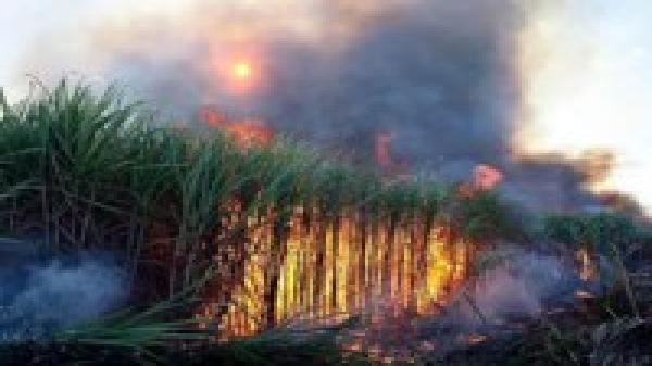 Cháy 100 ha mía, hàng chục tỷ đồng hóa tro than