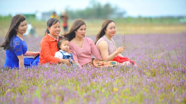 """Phát hiện """"cánh đồng Lavender tím"""" đẹp mê hồn cách Khánh Hòa không xa"""