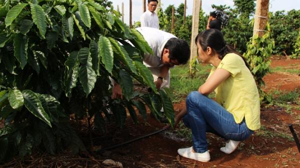 Tây Nguyên: Tưới tiết kiệm cho cà phê