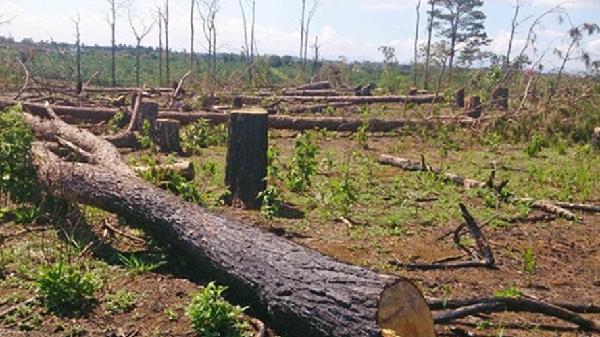 Đăk Nông: Bắt thêm đối tượng trong vụ Chủ tịch xã nhận hối lộ đồng ý cho phá rừng