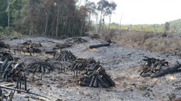 Đắk Nông: Nhận hối lộ, Phó trạm trưởng Trạm bảo vệ rừng bị bắt