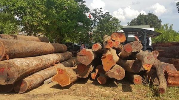 Vụ phá đường dây gỗ lậu 'khủng' ở Đắk Nông: Bộ Quốc phòng vào cuộc điều tra