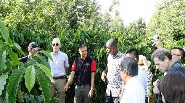 Hàng ngàn hộ nông dân hưởng lợi từ cà phê