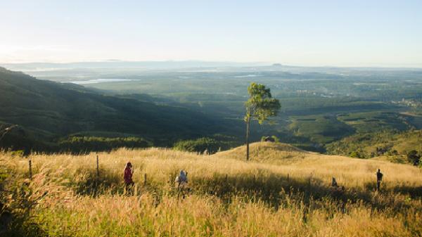 Thêm một mùa cỏ đuôi chồn nữa đã đi qua trên xứ sở Cao nguyên này