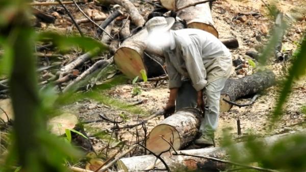 Đắk Nông: Truy tố thêm một lãnh đạo để mất rừng