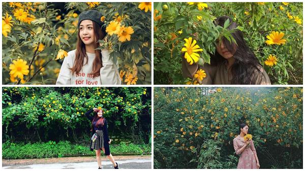 Tuyển tập những cô gái xinh đẹp bên hoa dã quỳ khiến dân tình xao xuyến