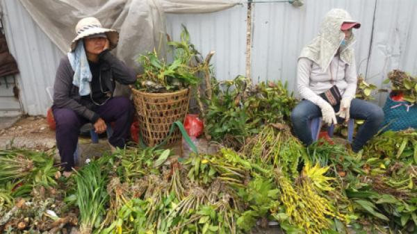 Kỳ thú chợ lan rừng bán giữa trung tâm thành phố