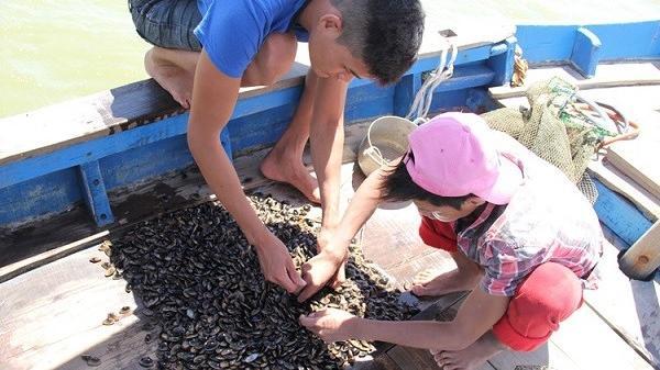 Điều ít biết về con chíp chíp đặc hữu của Đà Nẵng
