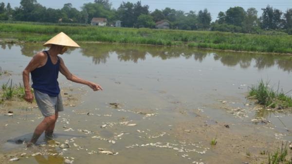 Đà Nẵng: Đi tìm nguyên nhân cá chết hàng loạt ở bàu Lệ Sơn
