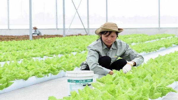 Đà Nẵng: Quy hoạch 7 địa điểm sản xuất nông nghiệp công nghệ cao