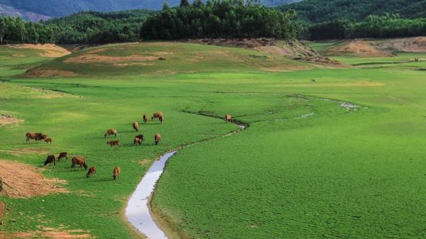 """Có một """"thảo nguyên Mông Cổ"""" ít người biết tới nằm ngay Đà Nẵng xinh đẹp"""