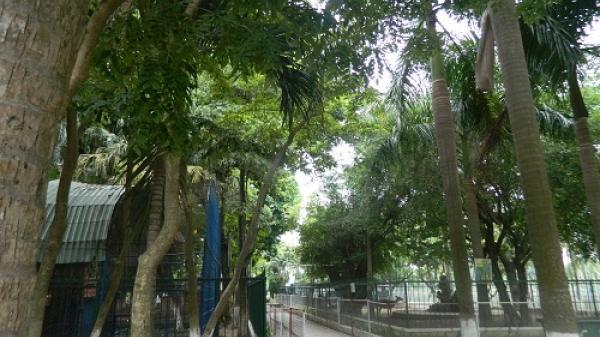 Công viên cây xanh 29/3 TP.Đà Nẵng xin giải thể
