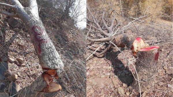 Nóng tình trạng chặt phá cây, chiếm đất rừng ở Ninh Thuận
