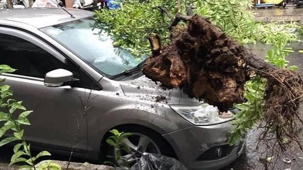 """Đà Nẵng: Xe con """"hứng trọn"""" một cái cây to sau cơn mưa lớn"""
