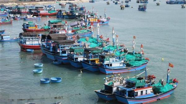 Ninh Thuận đẩy mạnh khai thác xa bờ, phát triển kinh tế biển bền vững
