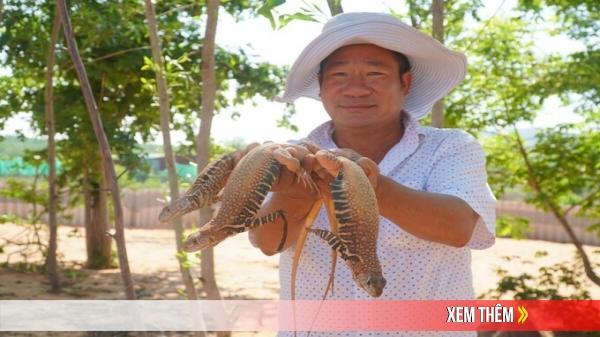 Nuôi con dông trên đất cát ở Bình Thuận