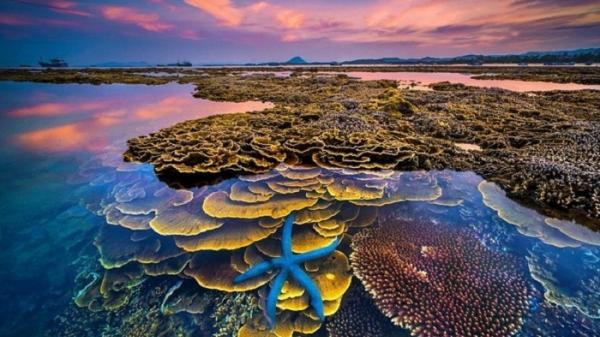 Vẻ đẹp bãi san hô lộ thiên ở Ninh Thuận
