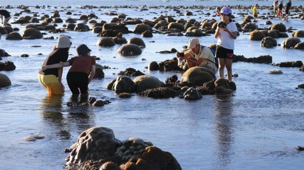 Chiêm ngưỡng bãi rạn san hô -'kho báu' lộ thiên ở biển Ninh Thuận