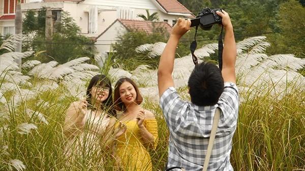 Đà Nẵng: Bông lau nở trắng trước thềm APEC 2017