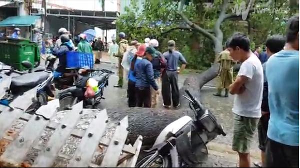 Mưa lớn, cây xanh bật gốc đè người đi đường ở Đà Nẵng